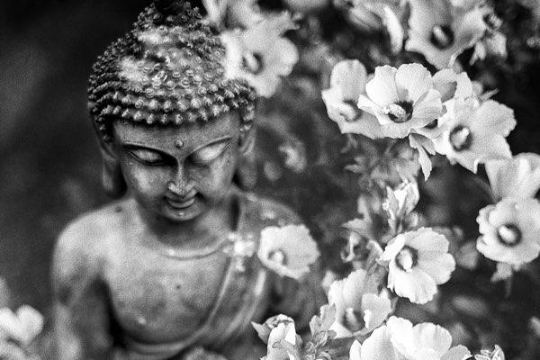 Loving kindness meditation - Kærlig venlighed på dansk